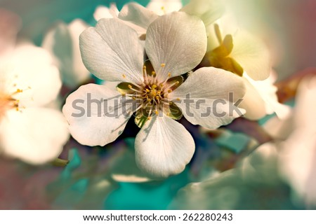 Blooming - flowering (flower closeup) - stock photo