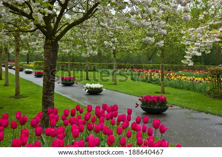 Blooming flowers and blossom in dutch garden 'Keukenhof', Holland - stock photo