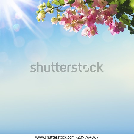 Blooming flowers and spring bokeh light background - stock photo