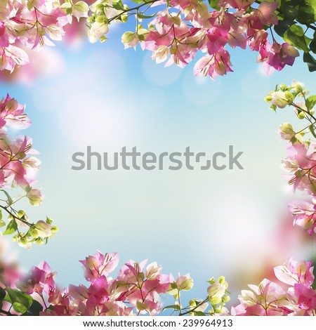 Blooming flowers and spring (summer) bokeh light background - stock photo