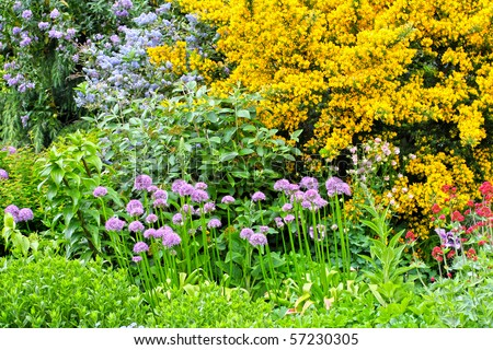 Blooming flowers in the spring garden - stock photo