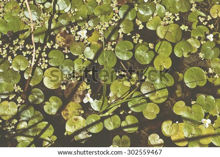 Blooming flowers on the lake, white flowers and green leaves, summer, sunny day. Trendy photo effect - stock photo