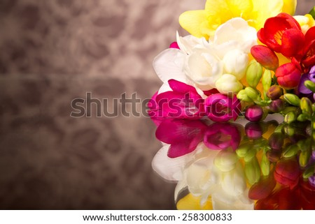 Blooming Freesia. - stock photo