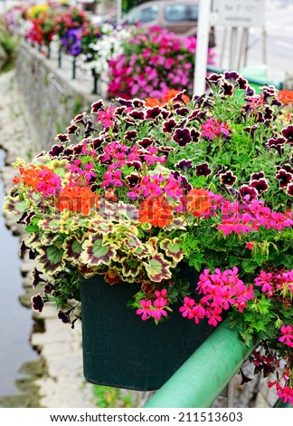 blooming geranium and petunia in a flower pot - stock photo
