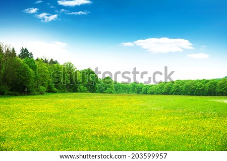 Blooming grassland  - stock photo