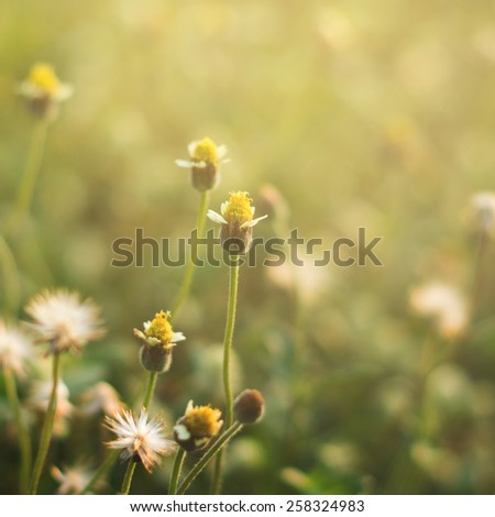 blooming meadow grass - stock photo