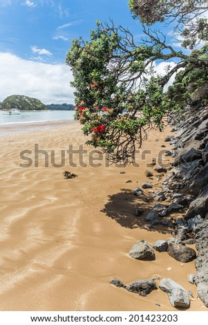 Blooming pohutukawa tree on the beach - stock photo