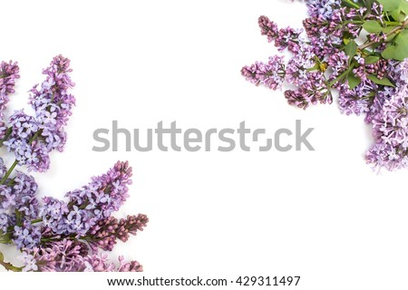 Blooming purple lilac branch, isolated on white background - stock photo