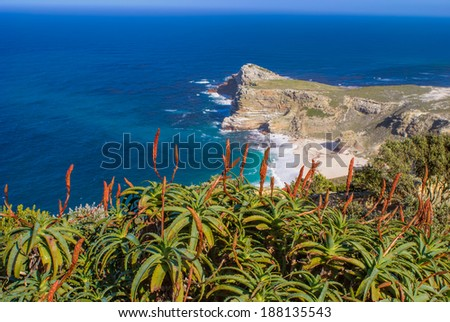 Blooming red aloes overlooking deep blue Atlantic ocean at Cape Point - stock photo