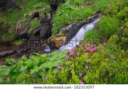 Blooming rhododendron bush in a forest glade. Mountain creek in a lush green forest. - stock photo