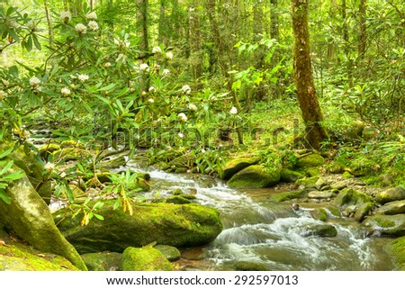 Blooming Rhododendron in mossy creek. Smoky Mountains National Park. - stock photo