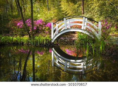 Blooming Spring Azalea Flowers Garden Nature Pond South Charleston SC peaceful flower reflections - stock photo
