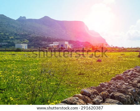 Blooming spring meadow on the island. Favignana, Sicily - stock photo