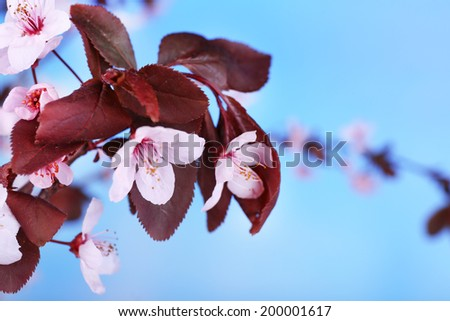Blooming tree branch with pink flowers on bright background - stock photo