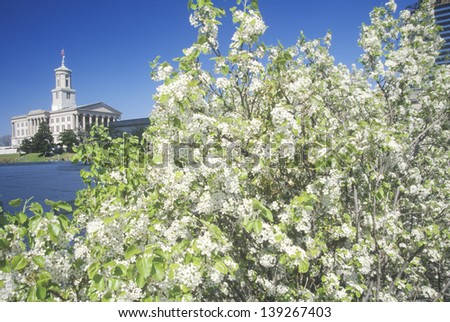 Blooming tree with the State Capitol of Tennessee in the background in Nashville, TN - stock photo