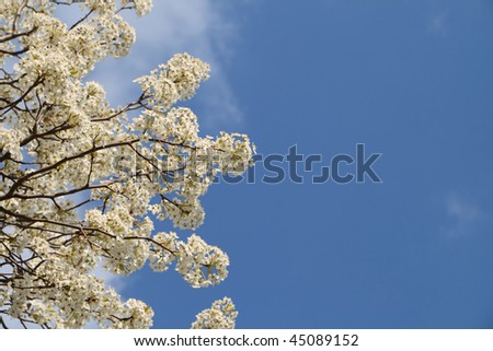 Blooming trees Flowers and Blue Sky at Spring Time - stock photo