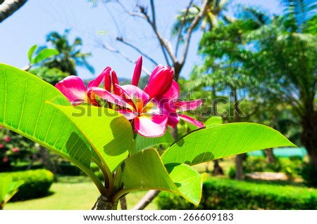 Blooming Trees Idyllic Blossom  - stock photo