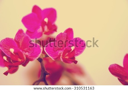 Blooming Twig Of Orchid Isolated On White Background. retro - stock photo