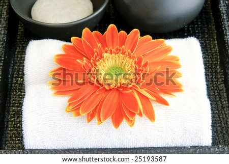 blossom and spa - stock photo