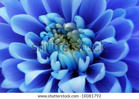 blossom blue macro abstract nature flower bloom color wallpaper - stock photo