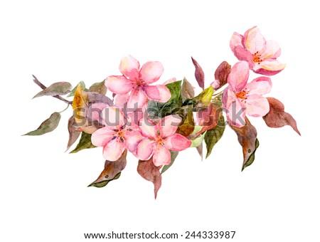 Blossom branch (cherry, plum, peach, sakura) with pink flowers. Watercolor - stock photo