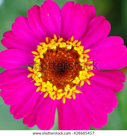 blossom flower colorful - stock photo