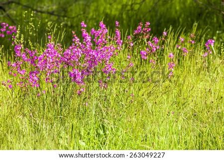blossom meadow - stock photo