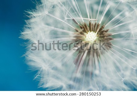 blossom of dandelion blowball with blue sky bavkground - stock photo