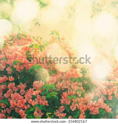 Blossom Pink Flowers on Tree. Nature background. Spring flowers. Toned image - stock photo