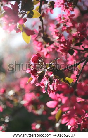 Blossom tree over nature background/ Spring flowers/Spring Background.  - stock photo