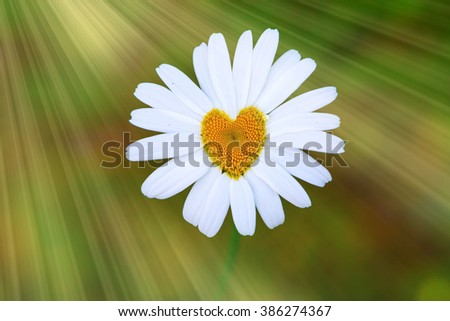 Blossom with Heart - stock photo
