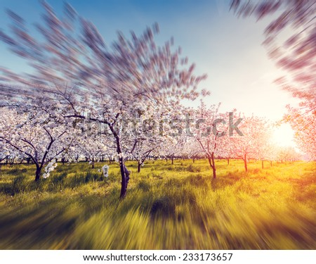 Blossoming apple orchard in spring and blue sky. Retro style filter. Instagram toning effect. Ukraine, Europe. Beauty world. Tilt shift blur effect. - stock photo