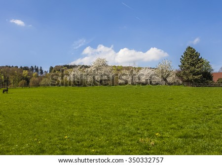 Blossoming cherry trees in Hagen, Osnabrueck country, Germany - stock photo