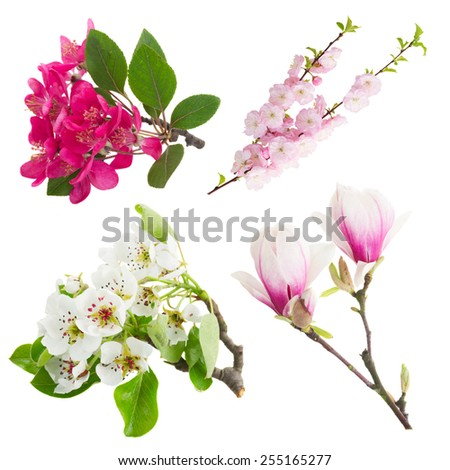 Blossoming fresh tree flowers against white background - stock photo