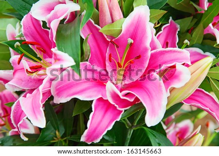 Blossoming lilies in the garden - stock photo