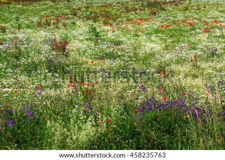 Blossoming meadow - stock photo