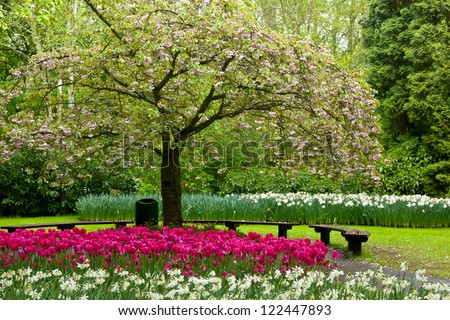 blossoming tree and blooming flowers in dutch garden 'Keukenhof', Holland - stock photo