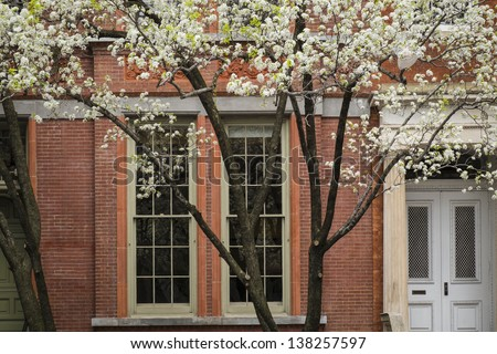 Blossoming tree near an old apartment building, Manhattam, New York City - stock photo
