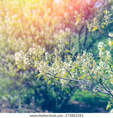 Blossoming tree with beautiful spring soft flowers - stock photo