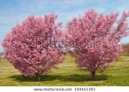 blossoming trees - stock photo