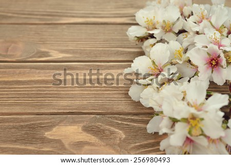 Blossoming twigs on a brown background - stock photo