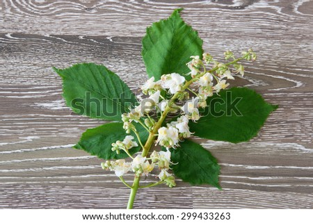 Blossoms of white chestnut on wooden background - stock photo
