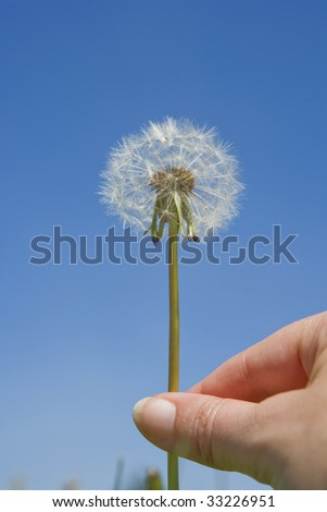 blow ball - stock photo