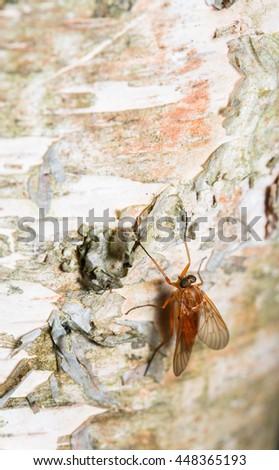 blow-flies, carrion flies, bluebottles, greenbottles, or cluster flies - stock photo