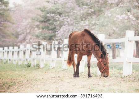 blown horse eating grass , pink tree background,film tone (with selective focus) - stock photo