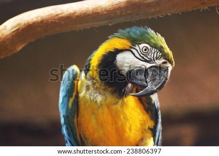 Blu and yellow parrot in cute profile - stock photo