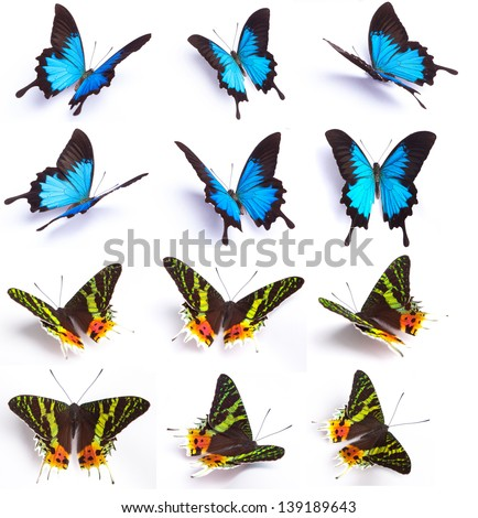 Blue and colorful butterfly isolated on white background  - stock photo
