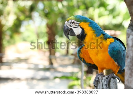 Blue and Gold Macaw - stock photo