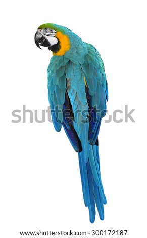 Blue and Gold Macaw Parrot isolated on a white background - stock photo