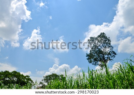 Blue and green - stock photo